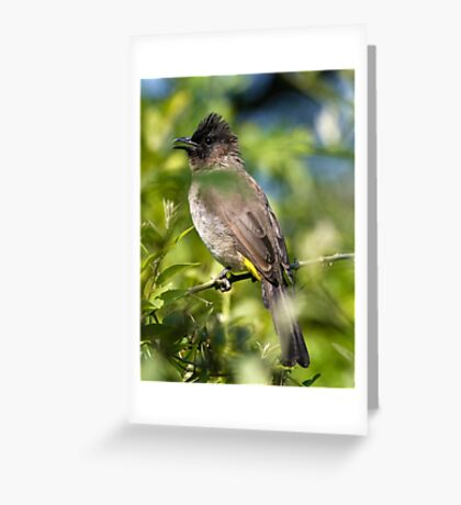 Dark Capped Burbul Greeting Card