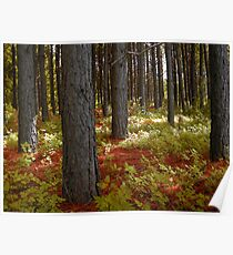 Morning Light in the Woodland Poster