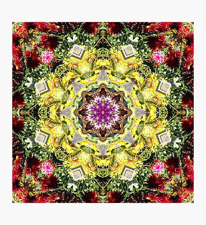 Dahlia's in Bloom Fractured Photographic Print