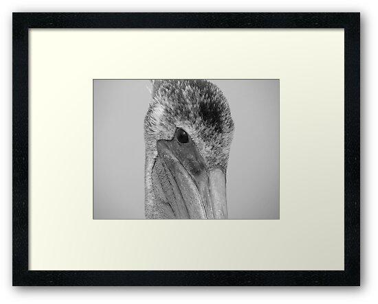 "Pelican Eye by Lenora ""Slinky"" Ruybalid"