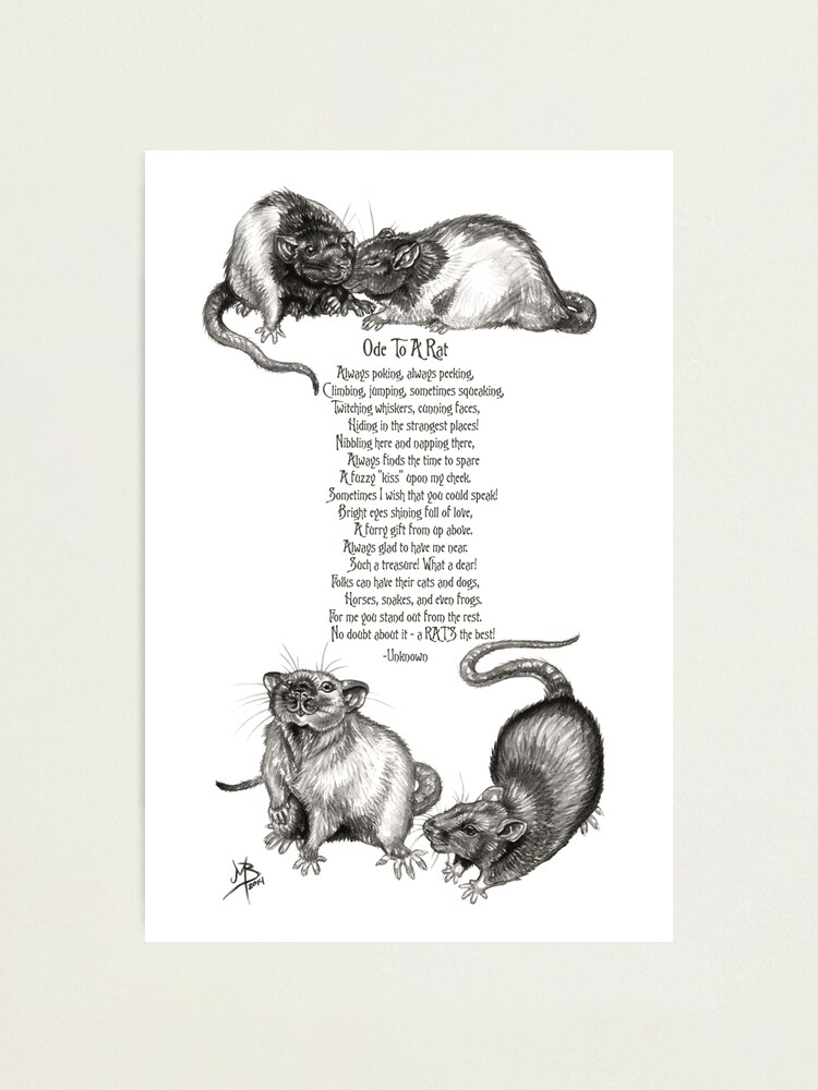 Alternate view of Ode To A Rat Photographic Print
