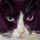 Cat is watching you by Ken Humphreys