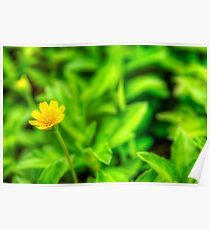 Yellow Blossom Poster