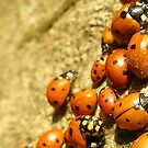 ladybirds near the water by natoly