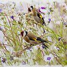 Goldfinches Feeding by Tanya C  Smith