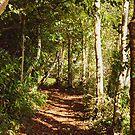 Autumn Woodland by Tanya C  Smith