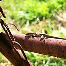 A little lizard by Danny  Cross