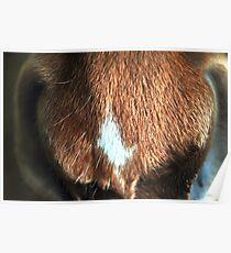 horse muzzle Poster