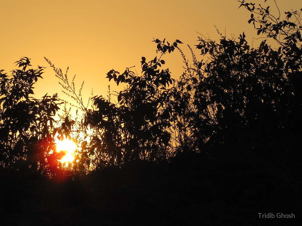 sunset thru' the bushes by Tridib Ghosh