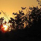 sunset thru' the bushes by Tridib Ghosh