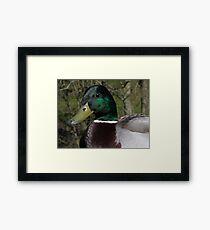 Duck bill Framed Print