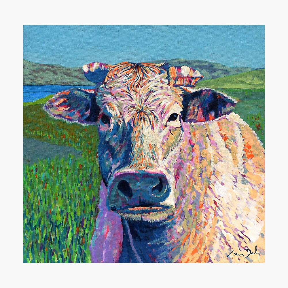 Bovine (Cow. Well, technically a bullock) Photographic Print