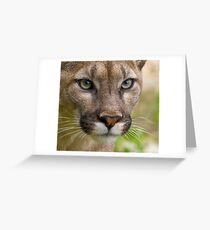 The Cat with many names....... Greeting Card