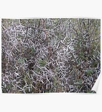 Thorn bush Poster