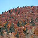 Bieszczady Mountains . Poloniae Alpe Besczade. Бещади . October 2018. ©Dr.Andrzej Goszcz Photography. No.6. Canon 5D. by © Andrzej Goszcz,M.D. Ph.D