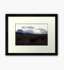 Cattle in the Foothills Framed Print