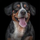 Drawing Entlebucher Mountain Dog by bonidog