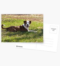 Buster Postcards