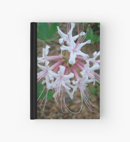 Swamp Azalea (Rhododendron viscosum) Hardcover Journal