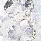 invert iris by thechillmethod