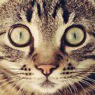«Gato» de La Chic