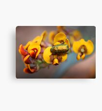Egg and Bacon Dinner Canvas Print