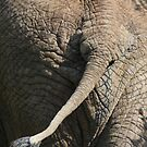The Elephant's (other) End by Zeanana