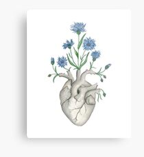 Floral Heart: Human Anatomy Cornflower Mothers Day Gift Metal Print