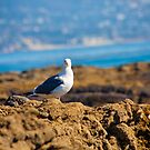 seagull by youngkinderhook