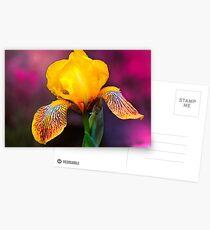 Yellow Iris Postcards