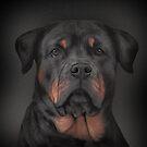 Drawing dog rottweiler  by bonidog