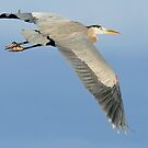 Heron by Betsy  Seeton