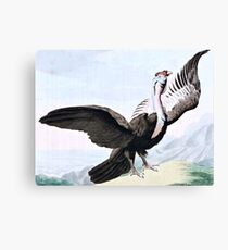 Condor Bird Wildlife Illustration Canvas Print