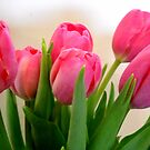 Tulips So Beautiful! by debbiedoda