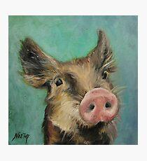 Little Piglet Photographic Print