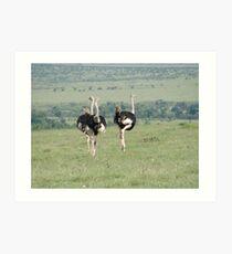 Ostrich in Masai Mara Art Print