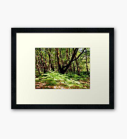 Sunlit Ferns Framed Print