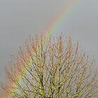 Rainbow And Tree by lezvee