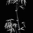 Intense dark grey design of tall bamboo with bushy leaves on black art print by AwenArtPrints