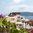 Flowers on Santorini by noeldolan