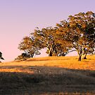 Sun Setting on the Adelaide Hills by Lexa Harpell