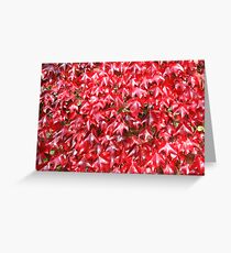 Redness Greeting Card
