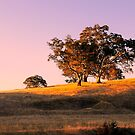 Sun Setting on the Adelaide Hills #4 by Lexa Harpell