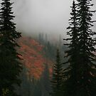 Fall Colors - Near Leavenworth, WA, Fall 2007 by nicholasclewis