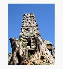 Great Tree, Siem Reap Photographic Print