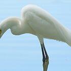 Snowy Egret by Betsy  Seeton