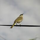 Bird on a house wire by Lozzle
