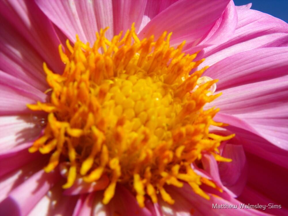Beautiful Bloom by Matthew Walmsley-Sims