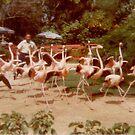 Chasing Flamingos by leystan