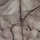 In Your Hands by Stephanie Hillson
